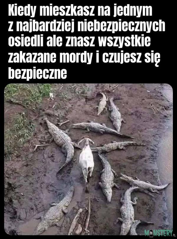 Osiedlowa saga