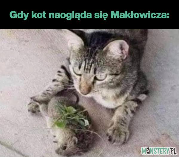 Kot Makłowicza