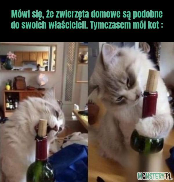 Kot właściciela