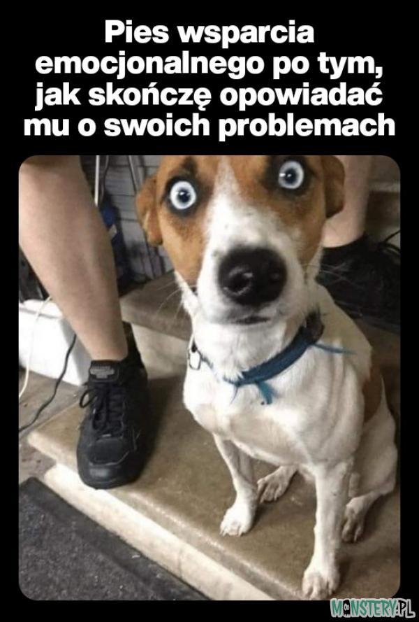Pies Cię zawsze wysłucha
