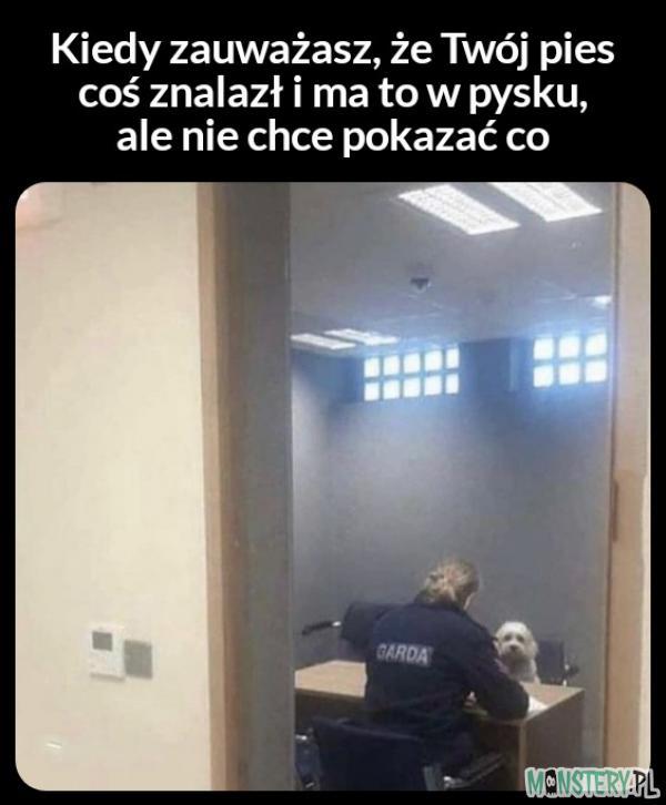 Przesłuchanie psa